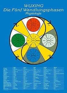 Lehrtafel Physiologie, Wuxing Die Fünf Wandlungsphasen Poster
